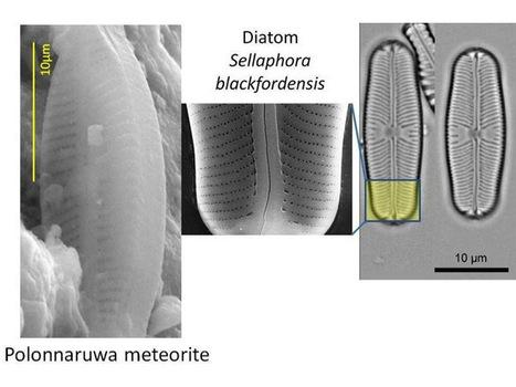 Gli extraterrestri esistono, tracce di vita su un meteorite | ToxNetLab's Blog | Scoop.it