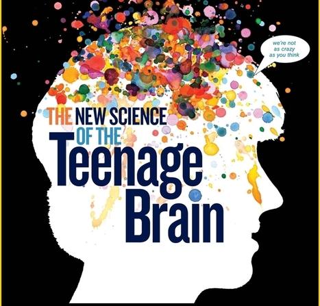 El cerebro sigue desarrollándose tras la adolescencia. The Journal of Neuroscience | Notas sobre el CEREBRO | Scoop.it