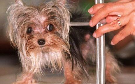 Montpellier : il massacre un chien qui urinait sur la roue de sa caravane | CaniCatNews-actualité | Scoop.it