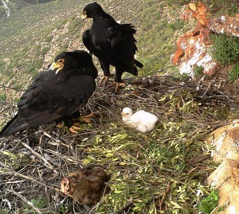 Eagles and agriculture coexist in South Africa   Gaia Diary   Scoop.it