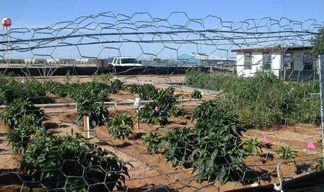 Prison Gardens Give Inmates the Opportunity to Grow Fresh Produce for Local Communities | Yellow Boat Social Entrepreneurism | Scoop.it