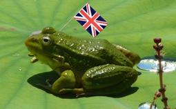 Les froggies parlent aux froggies | The Blog's Revue by OlivierSC | Scoop.it