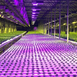 Just Add Pot: The Hydroponic Farming Company Ready to Grow Weed in 48 ... - Motherboard | Aquaponics~Aquaculture~Fish~Food | Scoop.it
