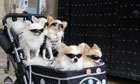 Why Japan prefers pets to parenthood | Animals Make Life Better | Scoop.it