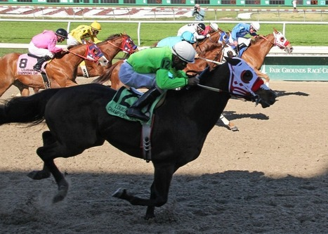Horse cloners try to force their way into the starting gate | Horse Racing News | Scoop.it