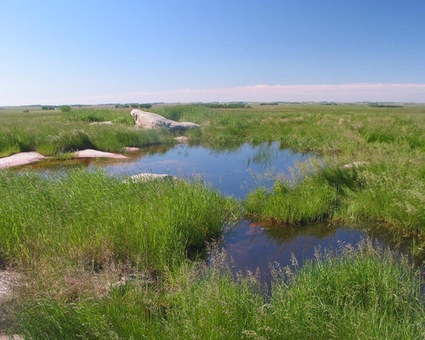 Conserving an Endangered Ecosystem: The Northern Tallgrass Prairie National Wildlife Refuge | U.S. Fish and Wildlife Service Midwest Region | Prairie and Grassland Ecosystems | Scoop.it