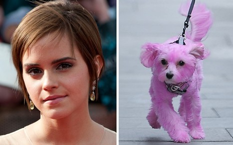 "Charge her with animal abuse ""Emma Watson spotted walking puppy dyed bubblegum pink"" 