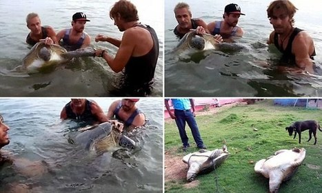 Tourist rescues endangered turtles that were tied up and left to die | All about water, the oceans, environmental issues | Scoop.it