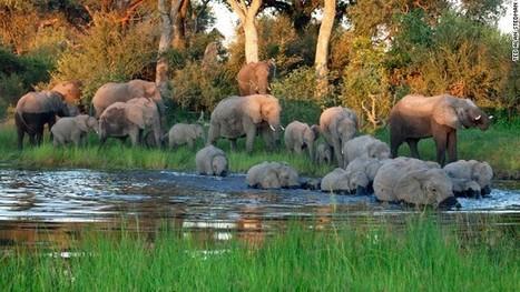 "Namibia -- a wildlife photographer's paradise | NIALA TUANER ""Hobbyist Wildlife Photographer"" | Scoop.it"