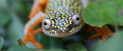 Amazon Reptiles   Save and Protect the Rainforests   Scoop.it