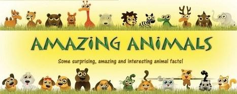 Amazing Animals: Amazing Birds 4: The Raptors | Threats to raptors | Scoop.it