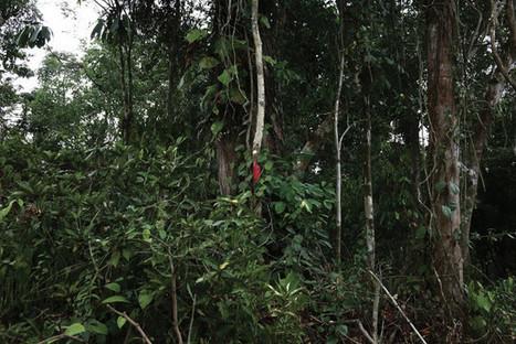 La Socfin menace toujours les forêts africaines | Afrique: développement durable et environnement | Scoop.it