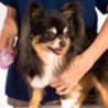 Dog Grooming at Home In Riverdale