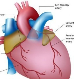 Medical School | What It Takes to Be a Cardiologist | A Cardiologist Takes Care Of The Heart | Scoop.it