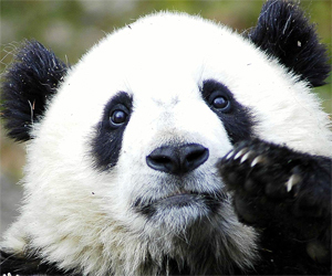 What Panda, Penguin and Social Media Really Mean for Brands | NYL - News YOU Like | Scoop.it