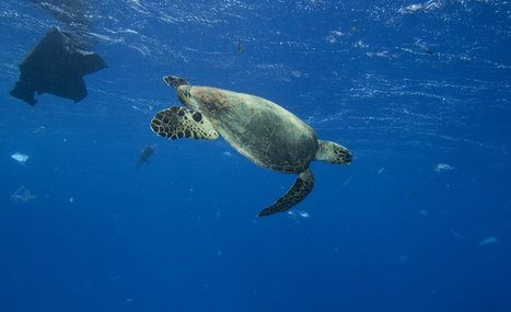 Here's What Happens When Marine Animals Eat Plastic – and Why You Should Care   Plastic Pollution   Scoop.it