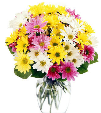 24pcs Colorful Malaysians Mums deliver to your Uncle to get well soon – Colorful_Malaysians_Bouquets#004 | mother's day flower | Scoop.it