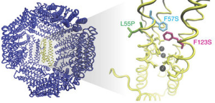 Engineers design enhanced magnetic protein nanoparticles to better track cells | KurzweilAI | Longevity science | Scoop.it