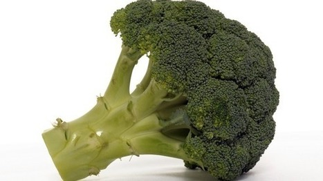 Super broccoli helps fight ageing | Anglia - ITV News | Botany, Applied Botany | Scoop.it