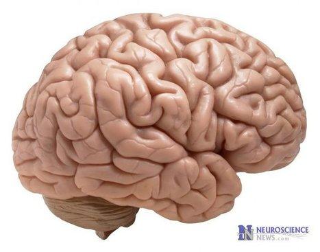 Simple Visual Test Checks Brain Function Quality | Café puntocom Leche | Scoop.it