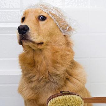 Assurance chien : Comparateur et devis gratuit - Misterassur | Assurance chien animaux | Scoop.it