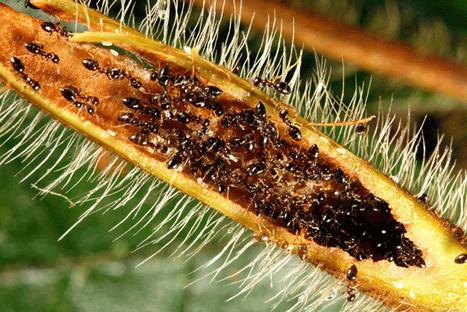 L'arbre et la fourmi : un bénéfice mutuel | EntomoNews | Scoop.it