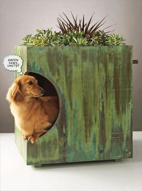 Build a Dog House out of Pallet | Upcycled Objects | Scoop.it