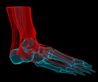 Tendons and tendinopathy with Jill Cook | Support and Movement | Scoop.it