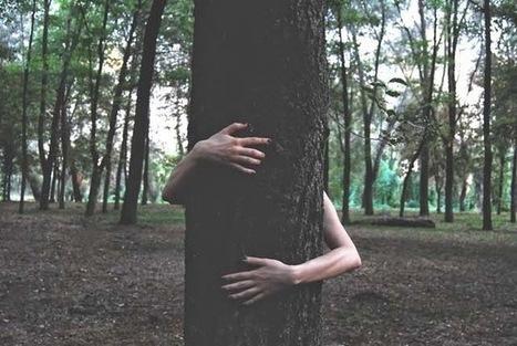La science prouve qu'étreindre des arbres est bon pour la santé - Le Nouveau Paradigme | Ce que nous partageons | Scoop.it
