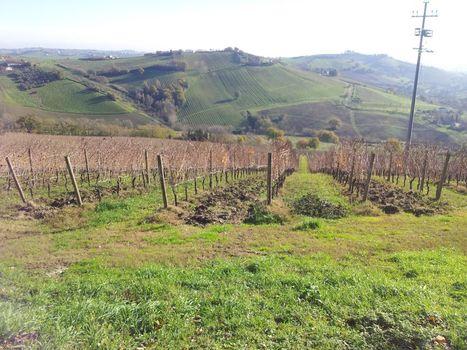 Sartarelli: Classic Verdicchio | Wines and People | Scoop.it