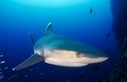 Conservation Groups Issue Call to Halt Shark Trade   All about water, the oceans, environmental issues   Scoop.it