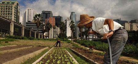 Organisation des Nations Unies pour l'alimentation et l'agriculture:L'agriculture urbaine | Economie Responsable et Consommation Collaborative | Scoop.it