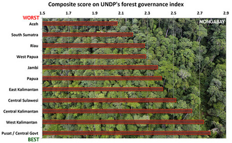 New UN report gives Indonesia low marks in forest governance   The Glory of the Garden   Scoop.it