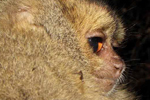 New mammal menagerie uncovered in remote Peruvian cloud forest | Conservation & Environment | Scoop.it