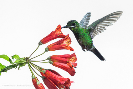 Google Hummingbird Friendly Content Marketing Tips | Search Engine Marketing Trends | Scoop.it