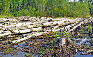 Can we rely on voluntary industry action to drive deforestation out of supply chains?   Responsible supply chains   Scoop.it
