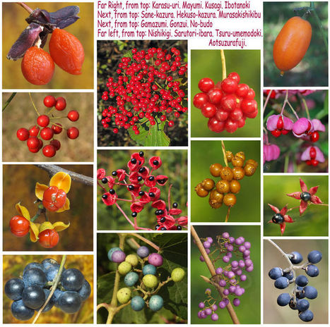 Kevin Short / Woodlands decked with colorful fruits in all shades of red, pink and purple | History | Scoop.it