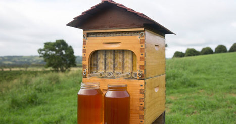 Honey on Tap Directly From Your Beehive | Quirky (with a dash of genius)! | Scoop.it