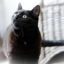 Oui, votre chat reconnaît votre voix. Mais il vous ignore ! - Wamiz | Educateur canin en Alsace - Etoile des bergers | Scoop.it