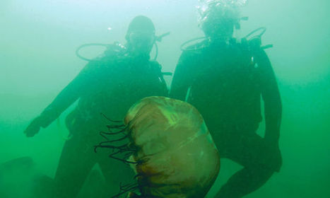 Monterey scuba divers help collect and map underwater trash. - Monterey County Weekly | Scuba Diving | Scoop.it
