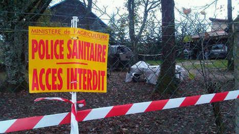 Cas de virus H5N1 en Dordogne : ce qu'il faut savoir sur la grippe aviaire | Agriculture en Dordogne | Scoop.it