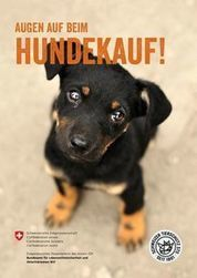 www.hundekauf.ch | ʕ·͡ᴥ·ʔ Welpenkauf Informationen | Scoop.it