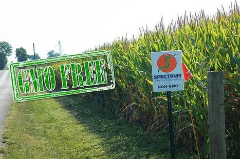 A Conventional Farmer's Transition to Non-GMO | Searching for Safe Foods | Scoop.it