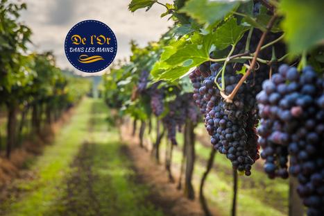 De l'or dans les mains. Entretien avec Benoît Roseau, viticulteur | Le Vin et + encore | Scoop.it