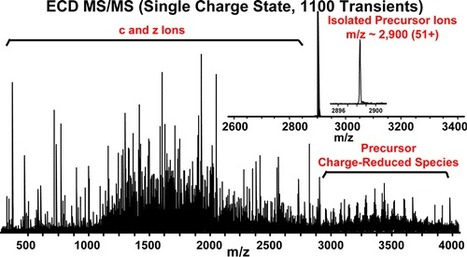 Top-Down Structural Analysis of an Intact Monoclonal Antibody by Electron Capture Dissociation-Fourier Transform Ion Cyclotron Resonance-Mass Spectrometry | Mass Spectrometry Daily | Scoop.it