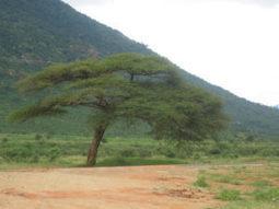 Le Sahel érige une « grande muraille verte » pour contrer le terrorisme | Planete DDurable | Scoop.it