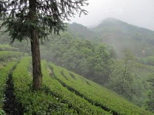Retour de Chine | Le Blog de Terre des Thés | Actualités de Terre des Thés | Scoop.it