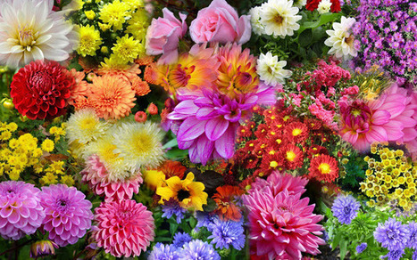 Fall blooming flowers and plants | Gardening Life | Scoop.it