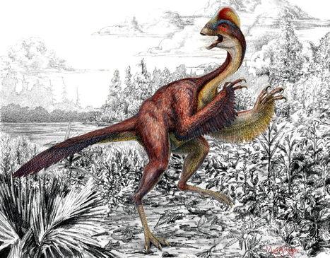 Découverte d'un dinosaure ressemblant à « un poulet de l'enfer » | Merveilles - Marvels | Scoop.it