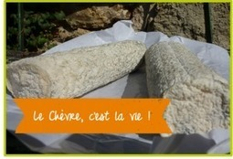 Il y a une paille dans le fromage | Say Cheese ! | Les Fromages | Scoop.it
